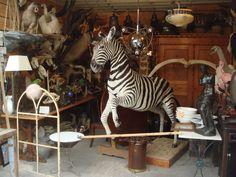 Taxidermy Zebra at Les puces de Saint Ouen