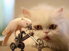 Meraklı hayvanların komik görüntüleri - 24. resim