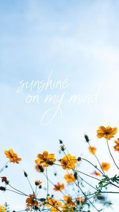 Sunshine on my mind flowers field quote inspirational background wallpaper you c… Frühling Wallpaper, Flowers Wallpaper, Happy Wallpaper, Spring Wallpaper, Sunflower Wallpaper, Phone Wallpaper Quotes, Cute Wallpaper Backgrounds, Tumblr Wallpaper, Pretty Wallpapers