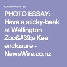 PHOTO ESSAY: Have a sticky-beak at Wellington Zoo's Kea enclosure - NewsWire.co.nz