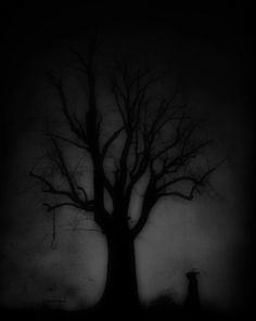 //♠️Trees like Carbon......When darkness falls