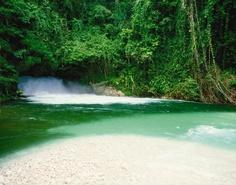 Tropical jungles in Papua New Guinea