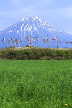 Mt. Fuji, Japan 麓の鯉のぼり