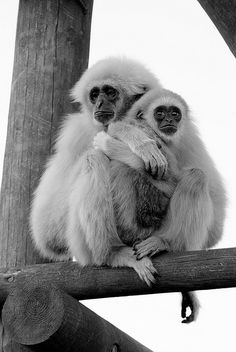 Pro vegan: Miserable by Taraji Blue, via Flickr.  Boycott zoos.  Animals suffer in so many of them.