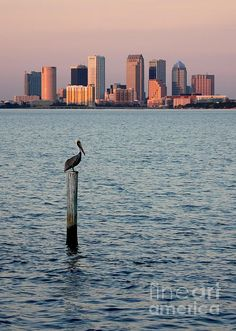 I will be here in 3 Months... Cannot come fast enough!!! :D #tampa #florida