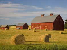 Barns and Hay Bales in Field Photographic Print by Darrell Gulin ...