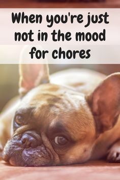 Domestic Cleaning Services in London & the UK Mans Best Friend, Best Friends, Funny Pictures, Funny Pics, Funny Stuff, Chronic Illness Quotes, Funny Animals, Cute Animals, Domestic Cleaning