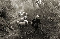 Jo Curzon and her Flock by James Ravilious