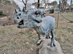 Dracorex hogwartsia. - Taken in Chianciano Terme. (Toscana, Italia). (January 2017)