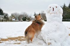 Sheltie and the Snowman