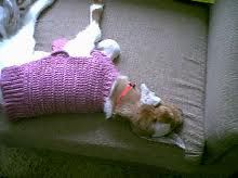 whew, being a stylin' goat is exhausting! Goats In Sweaters, Dogs, Animals, Animales, Animaux, Doggies, Animal, Animais, Dieren