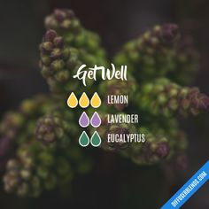 Get well essential oil diffuser blend recipe using lemon, lavender and eucalyptus.