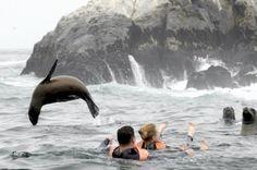 SWIMMING WITH SEA LIONS, PALOMINO ISLAND PERU