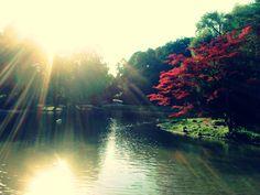 #Sonnenuntergang #EnglischerGarten #Herbst
