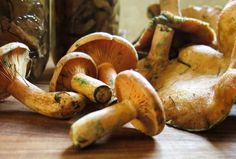 pickled saffron milkcap mushrooms