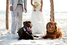 A Cape San Blas beach wedding means your best fur friends can come along for the ceremony.