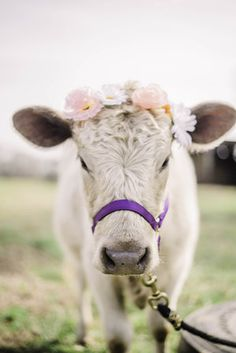Cute Baby Cow, Baby Cows, Cute Cows, Cute Baby Animals, Farm Animals, Animals And Pets, Funny Animals, Baby Elephants, Wild Animals