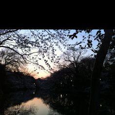 Sunset in Inokashira park