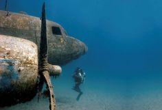 Resultado de imagem para amazing scuba diving photos