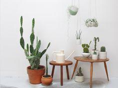 decorer-avec-des-plantes-3