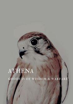 Athena Aesthetic, Athena Goddess Of Wisdom, Warfare, Knight, Animals, Animales, Animaux, Animal, Animais