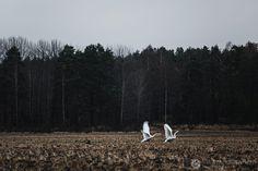 Metsä. Krista Keltanen