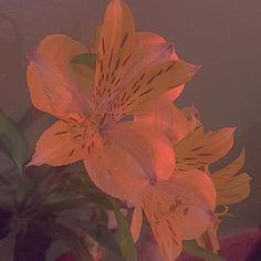 The main creative hub for roleplaying, writing, art, and more! Orange Aesthetic, Nature Aesthetic, Aesthetic Colors, Flower Aesthetic, Aesthetic Photo, Aesthetic Pictures, Collage Mural, Catty Noir, Photocollage