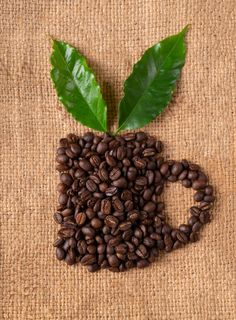 roasted coffee bean with leave on linin sack By anankkml¡¯s photos , Coffee Bean Tree, Coffee Beans, Tostadas, Coffee Works, Roast, Mary, Drink, Food, Photos