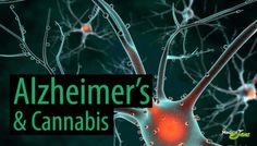 Stanford University Study Points to Endocannabinoid Deficiency as a Cause of Alzheimers