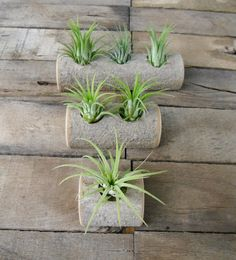 Tree Branch Tea Light Candle Holder Style Air Plant Pot.