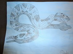 Pencil drawing, from a rubber snake, by 7th grader in Ms. Hazlett's Art class~