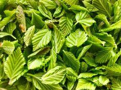 Spinach, Vegetables, Food, Vegetable Garden, Essen, Vegetable Recipes, Meals, Yemek, Veggies