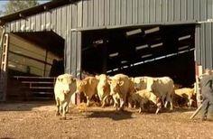Elevage des bovins - L'aménagement du territoire et la préservation des paysages