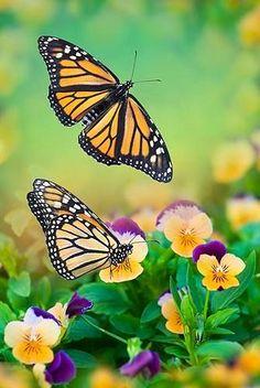 Spring #Butterflies