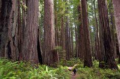 judi-hiking-prairie-creek-redwoods-7-13.jpg (4288×2848)