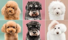 These before-and-after pictures of groomed dogs will make you squee