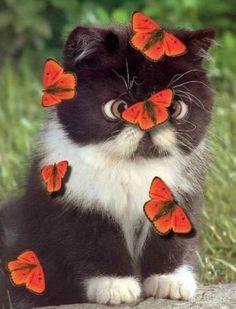Счастье подобно бабочке. Приходит неожиданно и тихонько садится на нос. :)