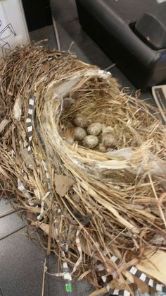 DIY nest did this with birds