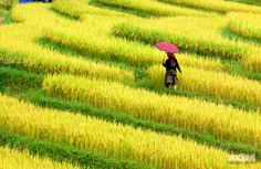 is it nice, everyone? it is in vietnam, a nation with many beautiful landsacpes