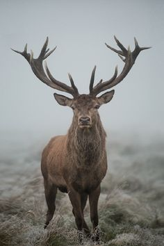 Close Encounters Of The Foggy Kind - by: { Max Ellis }