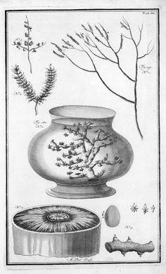 Old Marine Biology Literature | Göttinger Digitalisierungszentrum: Seitenansicht
