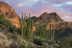 Organ Pipe by Greg McCown on 500px