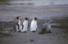 I'm A Penguin Too!
