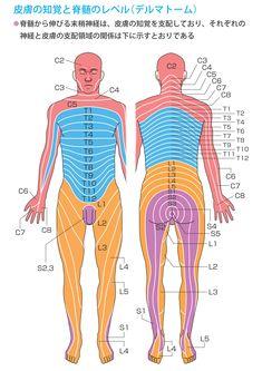 第1章 骨・神経・骨格筋の解剖と働き ~ ナースフル疾患別シリーズの看護師基礎知識 ~ Body Anatomy, Spa Massage, Medical School, Physical Therapy, Human Body, Health Care, Health Fitness, Knowledge, Exercise