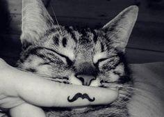 Cat #movember