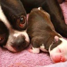 Mom and baby.....beautiful