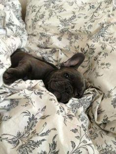 Tiny cozy pup.