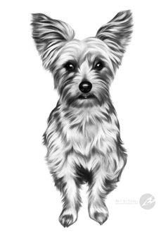 """Coco"" - yorkshire terrier graphite pencil drawing by Kerli Toode 