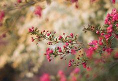 prettylittleflower:    fushia (by SurprisePally)
