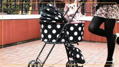 We have tried our best in bringing you the top 10 best dog strollers and hope you are now conversant with what, where and how to choose one for your pet. Dog Stroller, Baby Strollers, Outdoor Chairs, Outdoor Furniture, Outdoor Decor, Best Dogs, Your Pet, Pets, Top